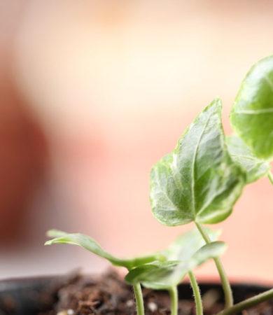 Important Tips for the New Herb Gardener