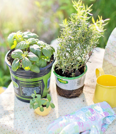 How to Plan Your Herb Garden